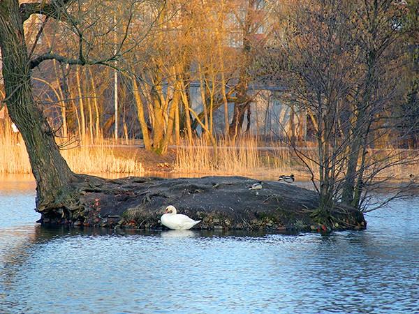 Летнее озеро Калининграда, часть 2