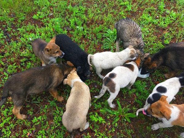 Нужна помощь щенкам, г. Чита