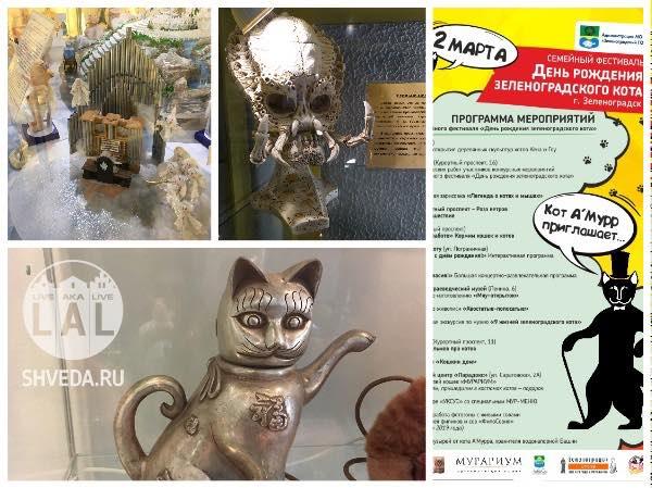 Анонс про день рождения Зеленоградского кота