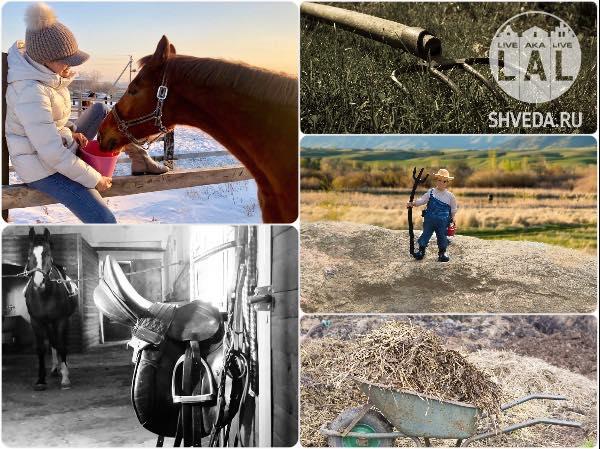 Из будней конников: кони, навоз и дачники