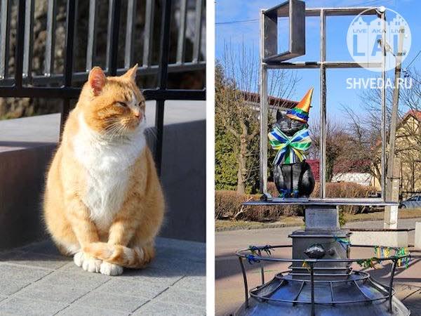 Как прошел праздник «День рождения Зеленоградского кота»?
