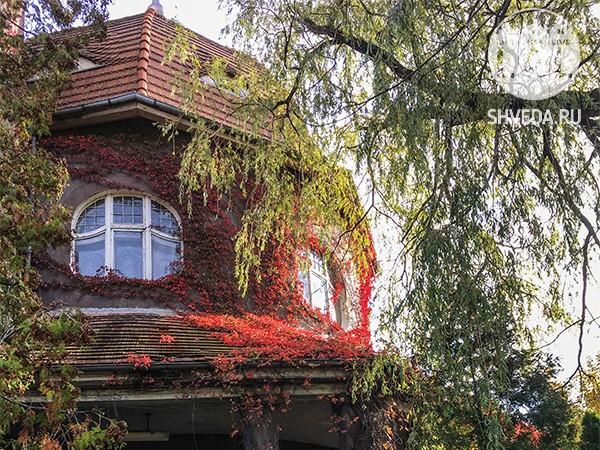 Что посмотреть в Светлогорске осенью