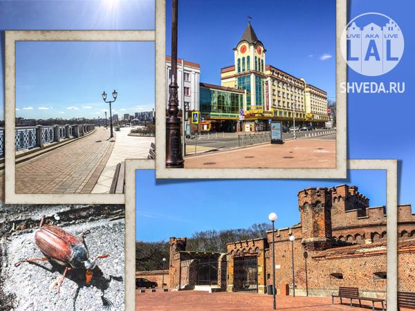 Майскае праздники в Калининграде